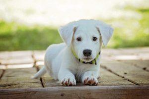 Commonly Misunderstood Myths about Pet Insurance